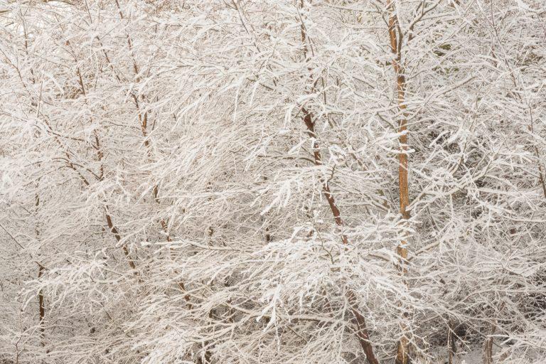 Snow Scene Strathearn