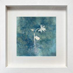 Paeonia ludlowii seedling – Cyanotype Original