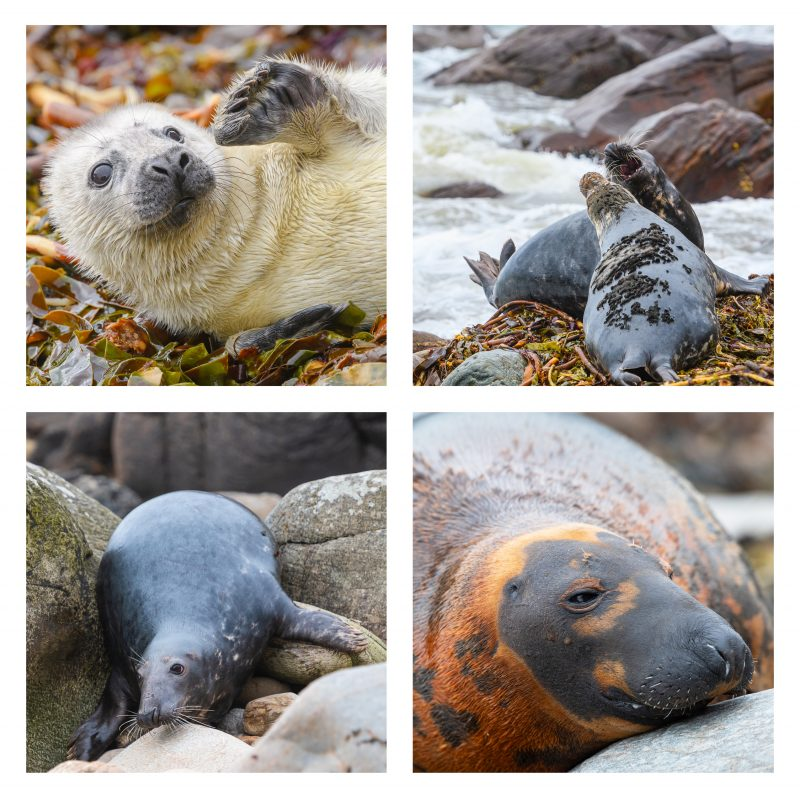 Seals Coasters set 1