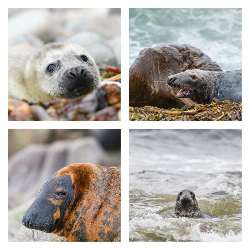 Seals Coasters set 2