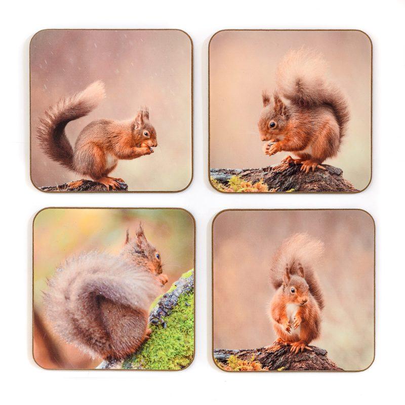 Squirrel Coasters