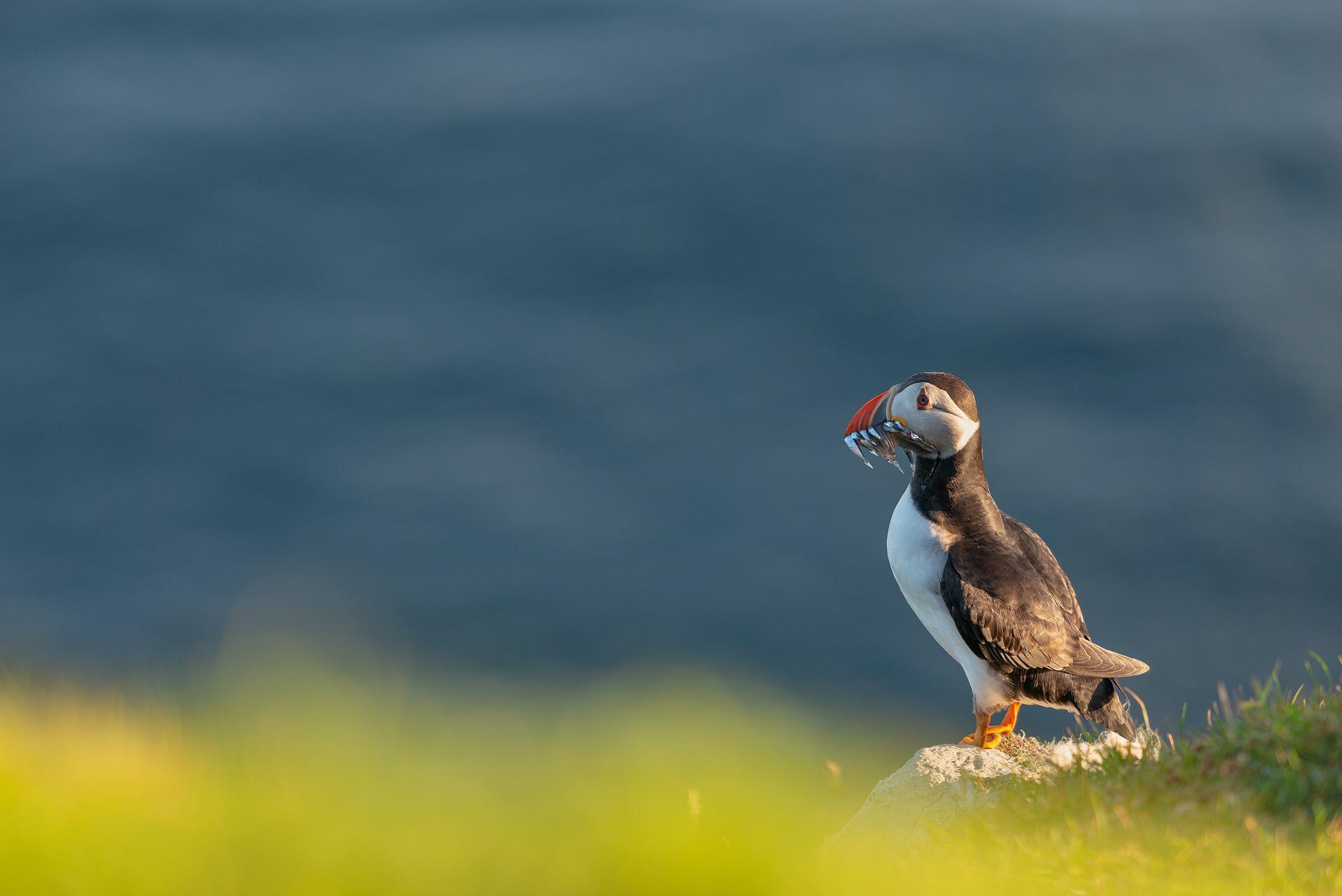 Morning Catch, St. Kilda