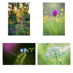 Handmade Greeting Card Pack – Macro – Spring to Summer