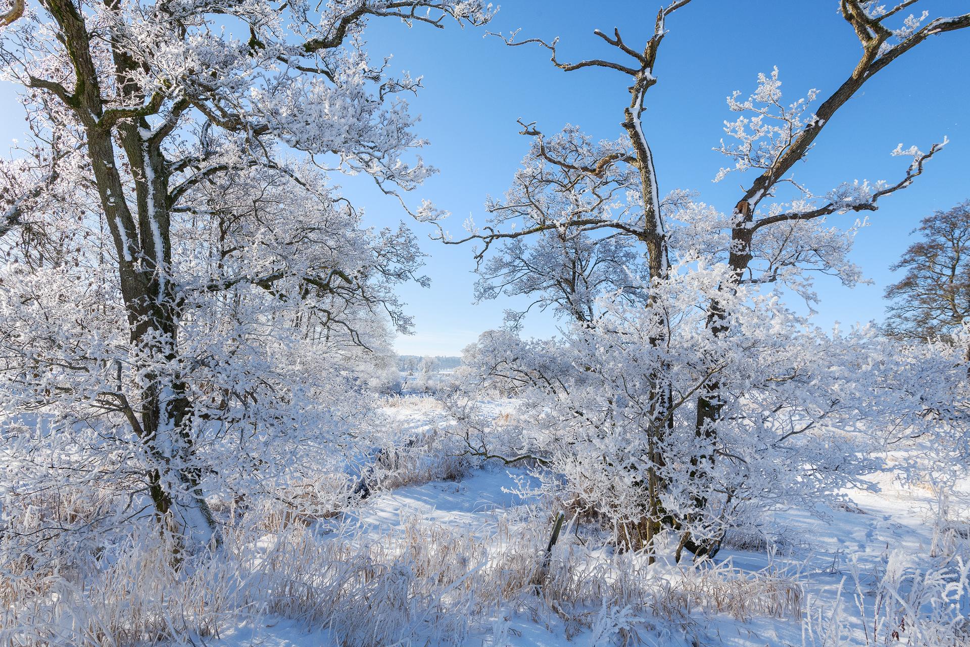 Hoar Frost in Strathearn  - Annette Forsyth Photography