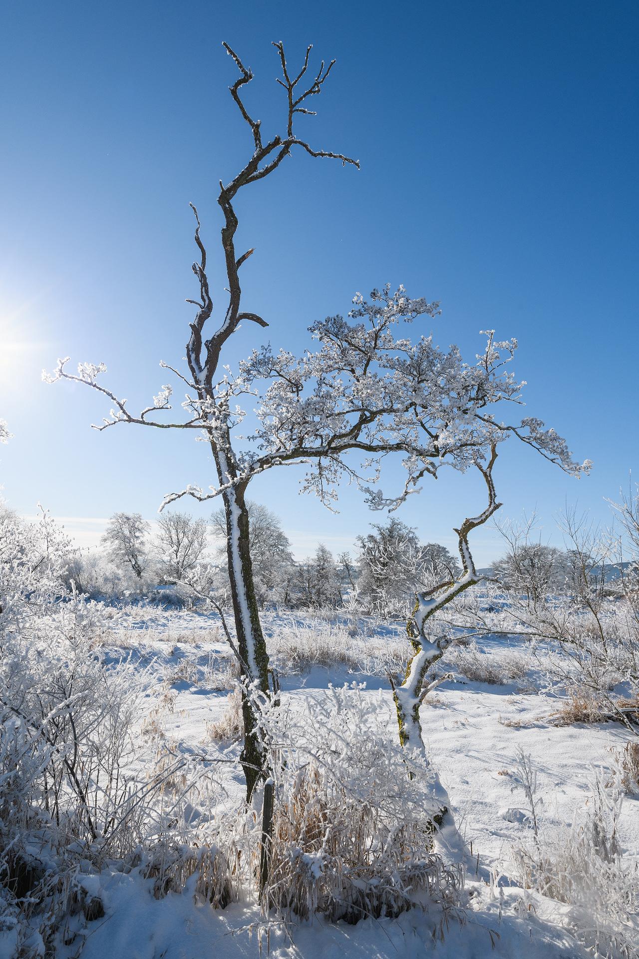 Earn Hoar Frost