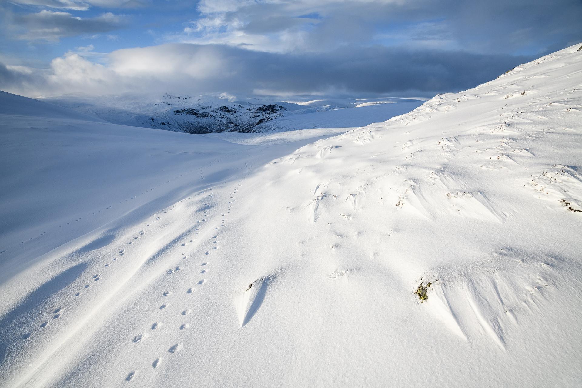Winter Tracks, Choinneachain Hill