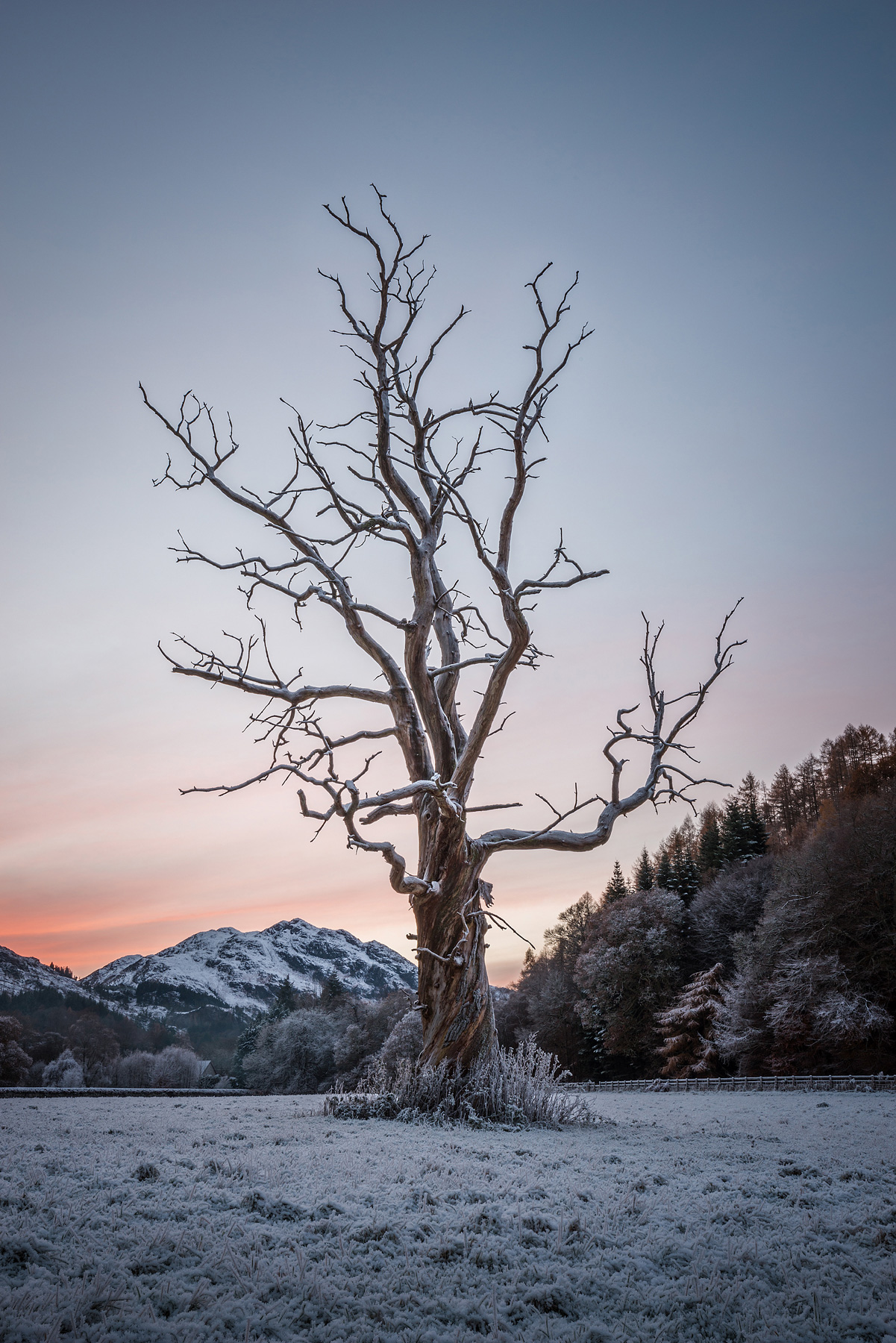 Frosted Tree, Dunira