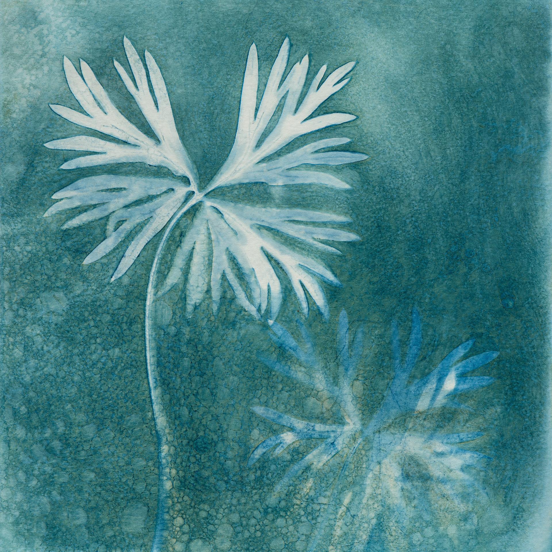 Aconitum napellus – magical Monkshood leaves