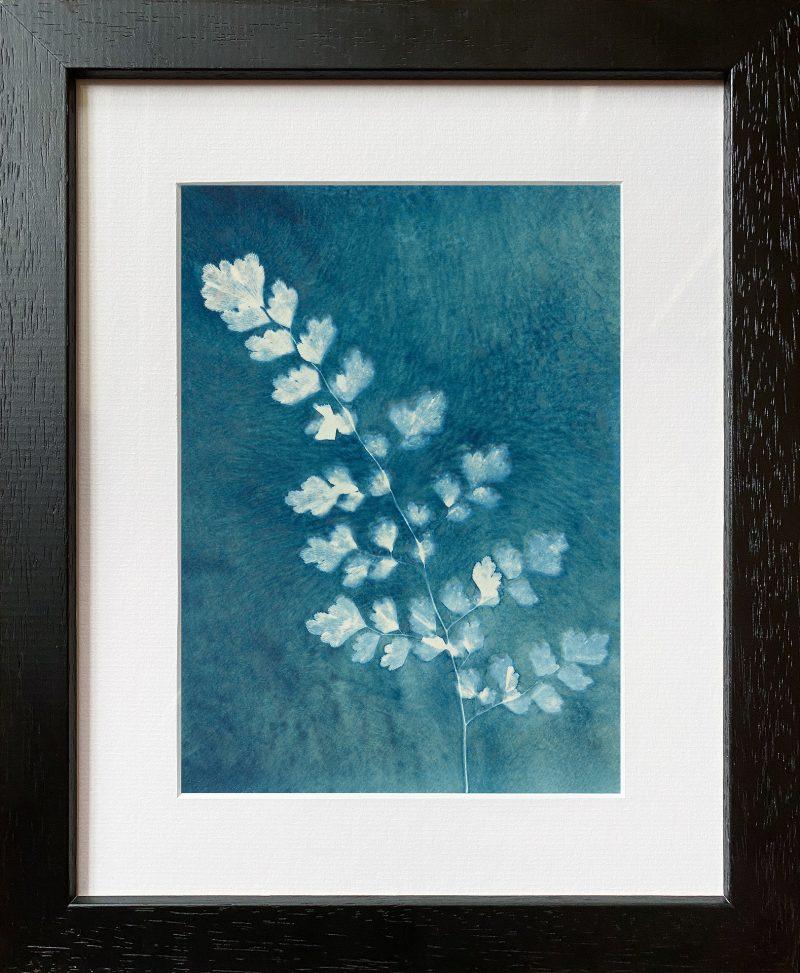 Adiantum aethiopicum - Maidenhair fern - frame black
