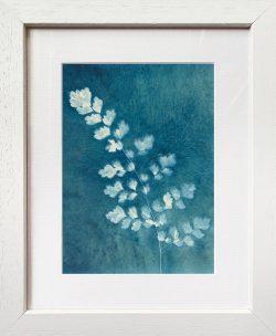 Adiantum aethiopicum – Maidenhair fern – Cyanotype Original