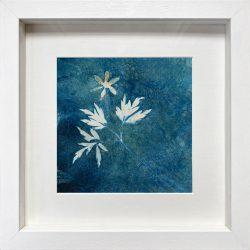 Anemone nemorosa – Wood anemone – Cyanotype Original