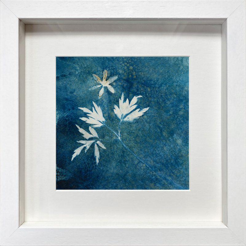 Anemone nemorosa - Wood anemone - frame white