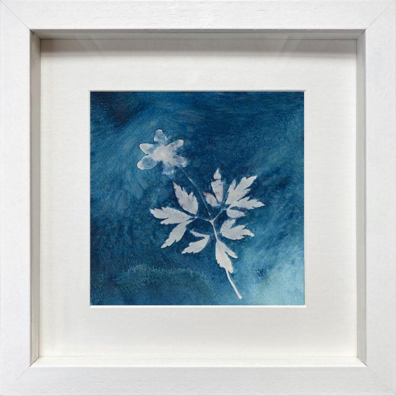 Anemone nemorosa - dusk - cyanotype - frame white
