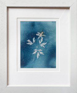Anemone nemorosa – small  – Cyanotype Original