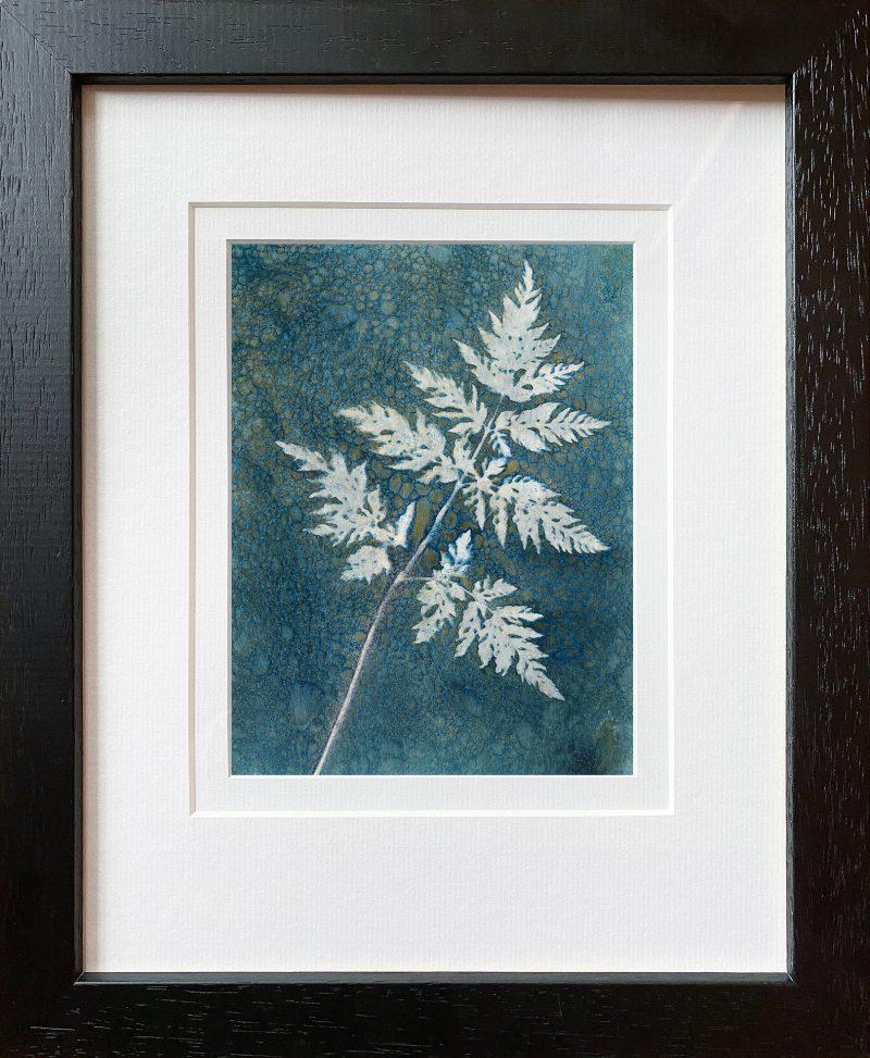 Anthriscus sylvestris- Cow parsley leaf - frame black