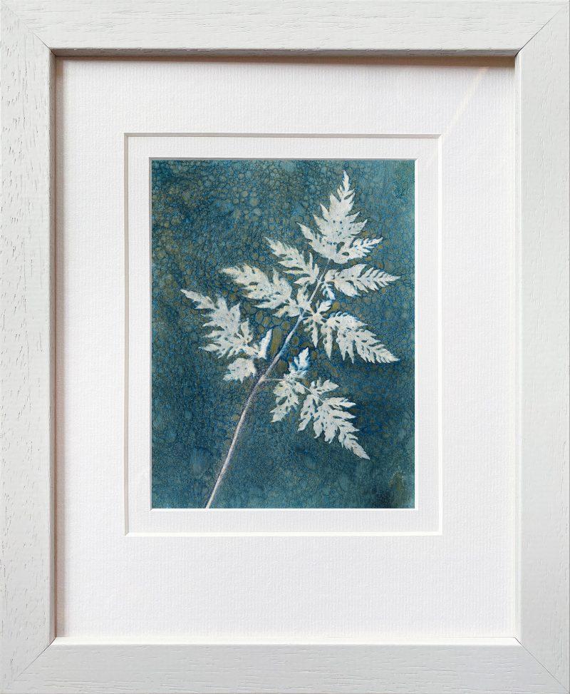 Anthriscus sylvestris- Cow parsley leaf - frame white