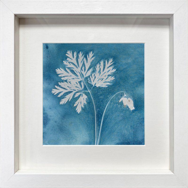Dicentra formosa 'Bacchanal' - frame white