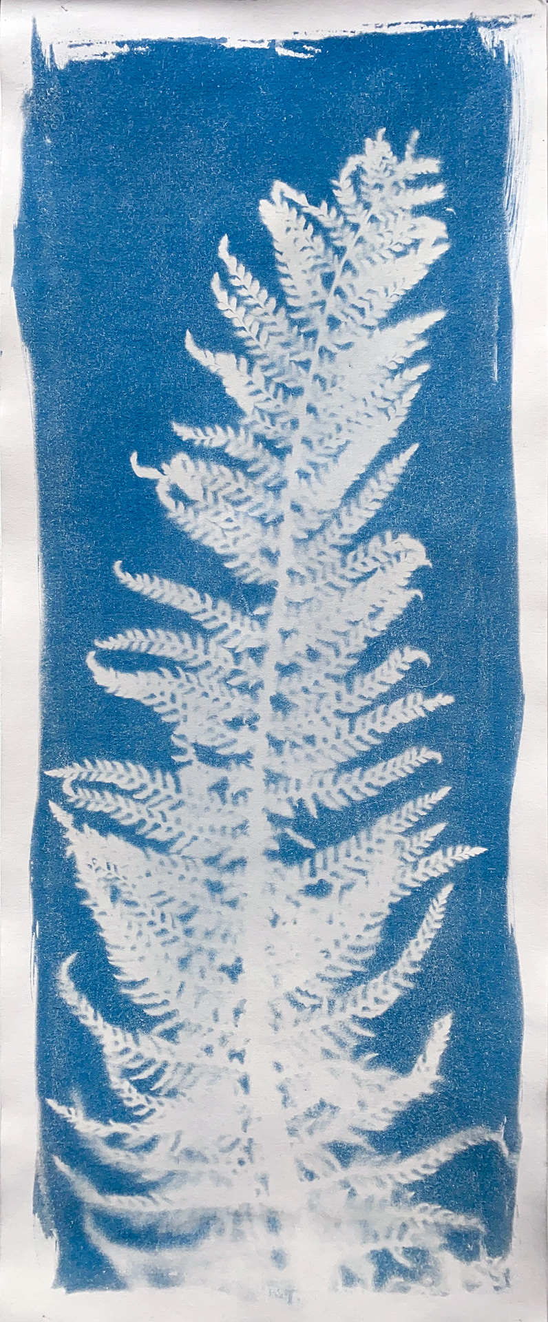 First Cyanotype - Winter Fern Frond