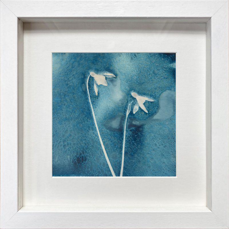Galanthus nivalis - Snowdrops - White frame