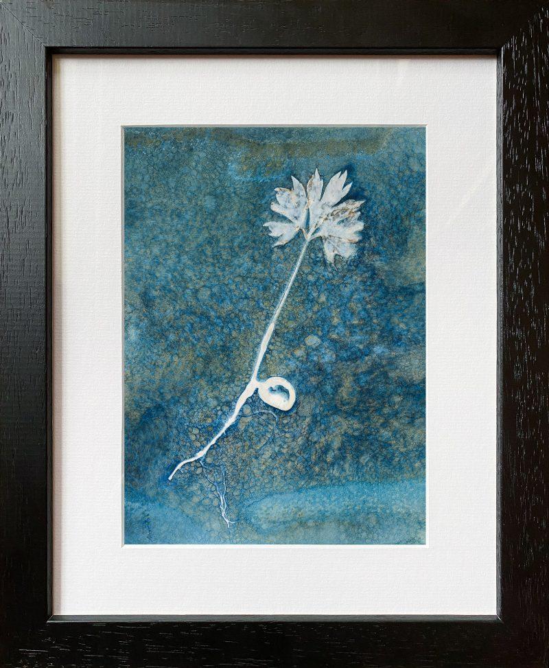 Paeonia ludlowii - tree peony seedling portrait - frame black