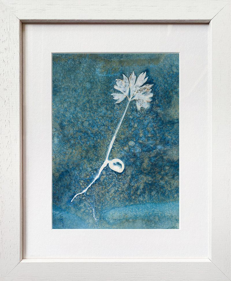 Paeonia ludlowii - tree peony seedling portrait - frame white