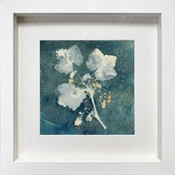 Redcurrant Branch with flowers – Cyanotype Original