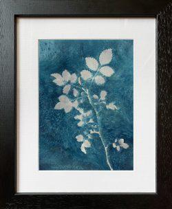 Rose leaves – Cyanotype Original