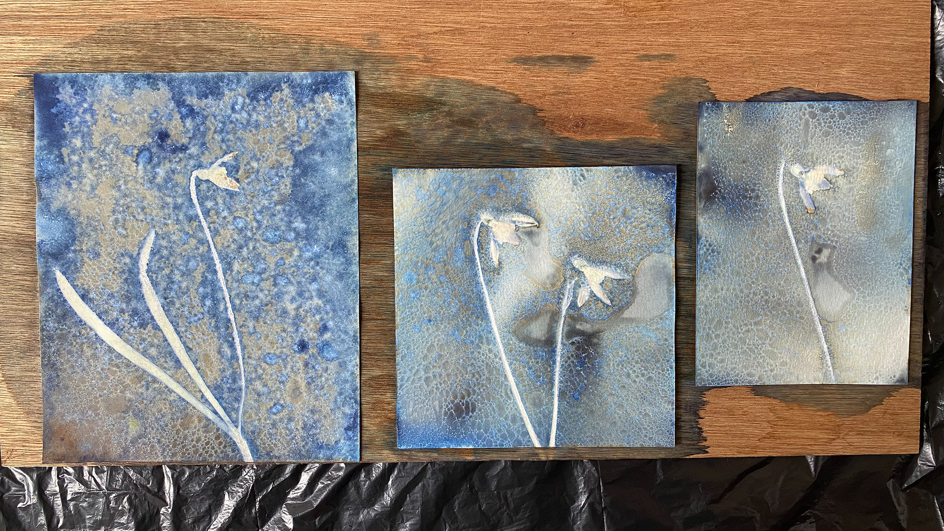 Wet Cyanotype after 2 hour exposure, plants just removed