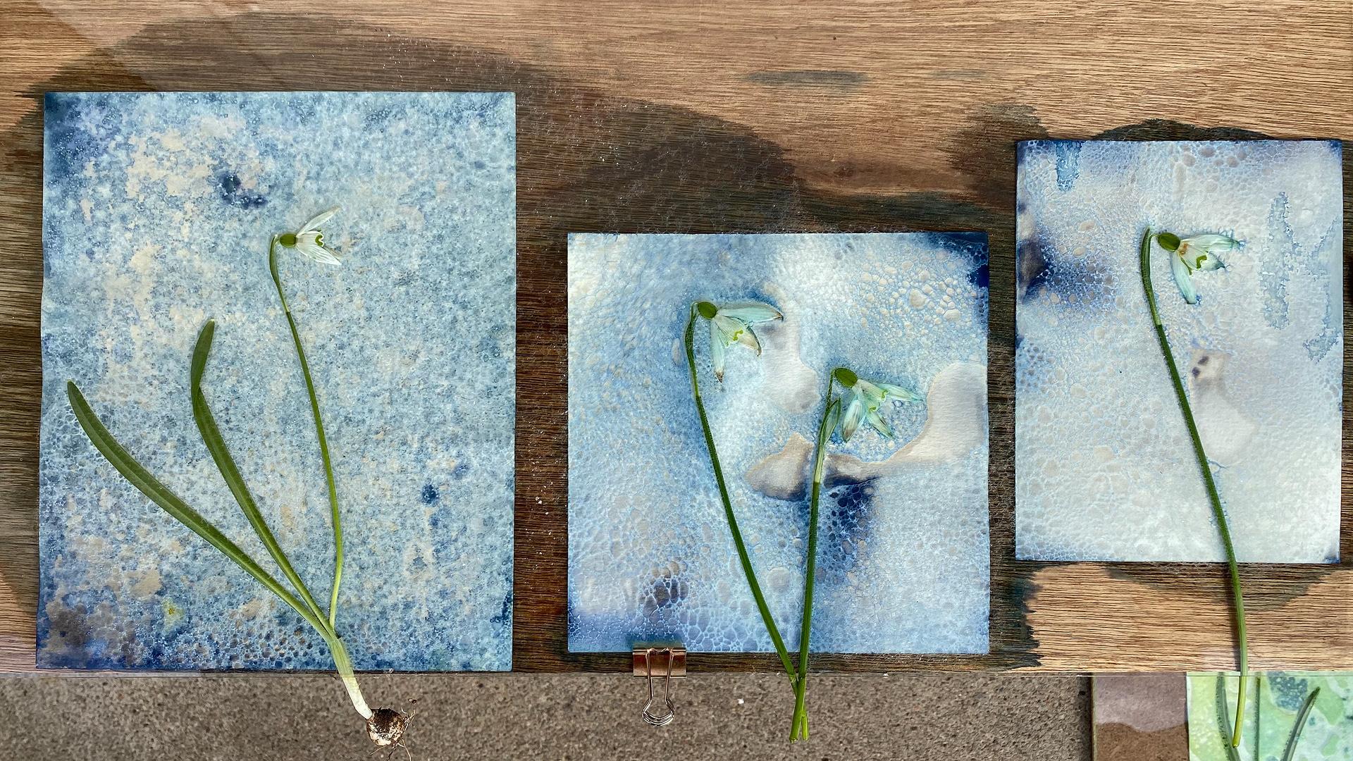 Wet Cyanotype after perhaps 10 minute exposure